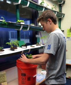 picture of student tending to the hydroponic garden