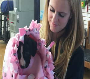 A dog receives a blanket made by SJHS students.